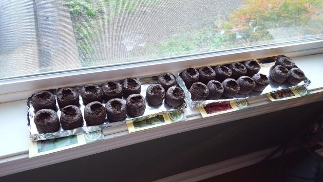 Seed starting, 4
